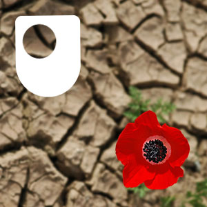 More like this podcast